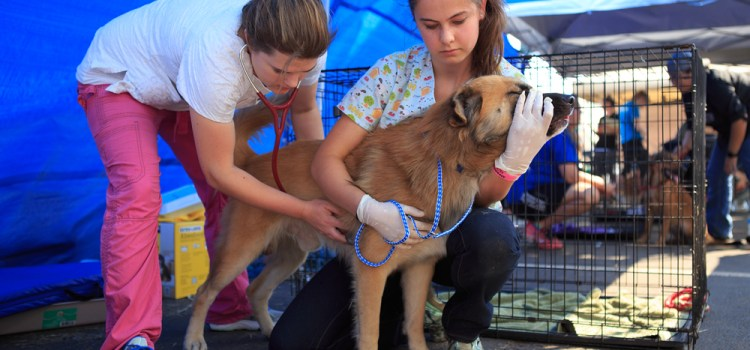 Parkland Residents Organize Supply Drive for Hurricane Harvey Pets