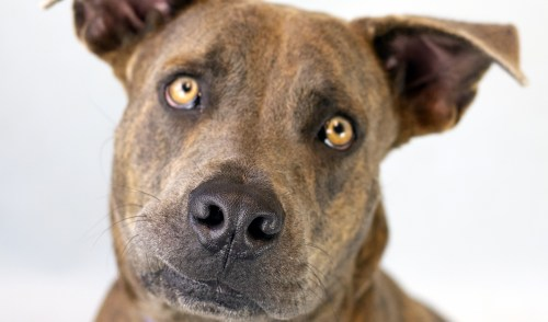 Head to the Shelter with the Humane Society's 'Black Furrday' Pet Adoption Event