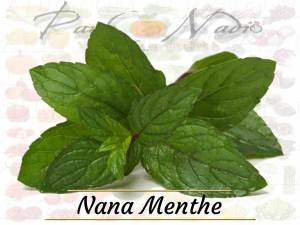 Nana menthe