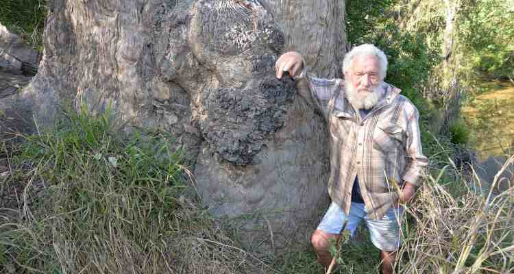 John Howes and the Logan's oldest tree named Gandalf