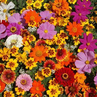Late Fall Desktop Wallpaper Monarch Butterfly Wildflower Mix From Park Seed