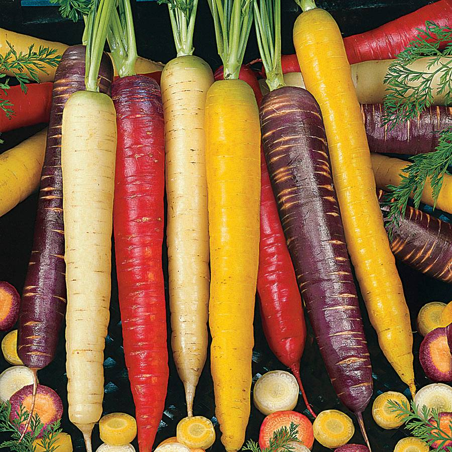 Rainbow Blend Carrot Seeds From Park Seed