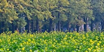 natuur herfst koolzaad terworm