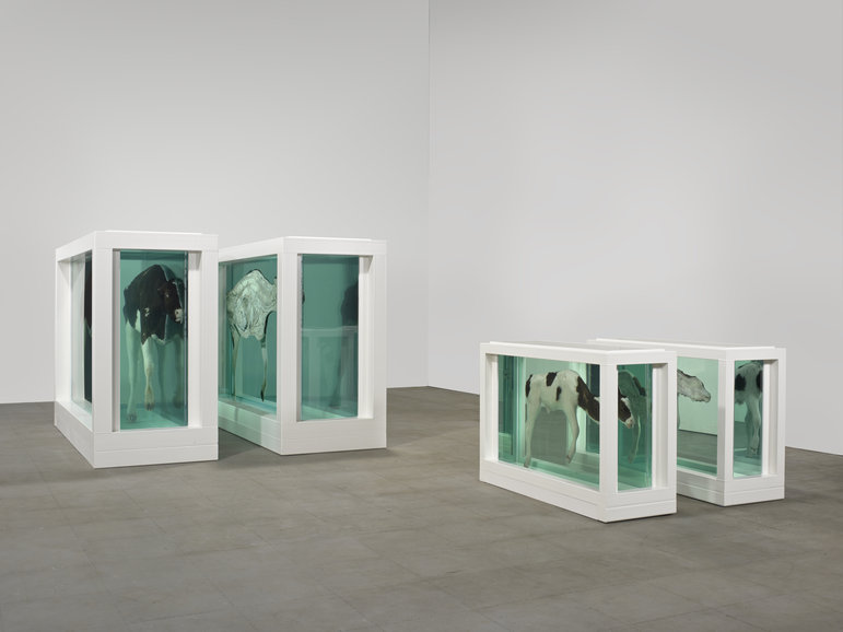 Mother and Child (Divided), 1993, Cupid's Lie, Damien Hirst
