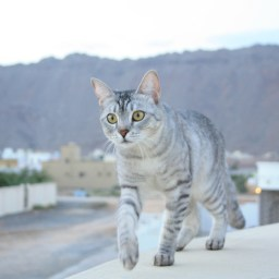 The night we left Oman with the cats