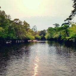 The Altamaha River, GA