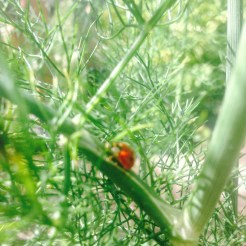 Ladybug in the garden!