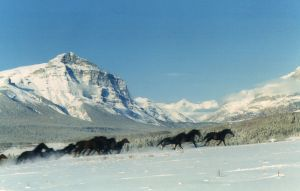 horses in snow0176