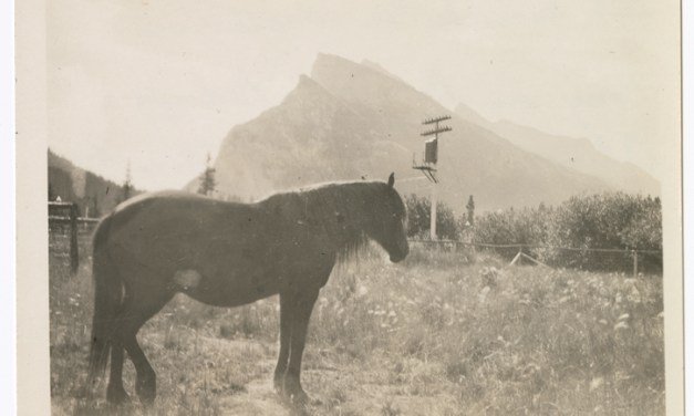 The Banff story of the Siberian pony named Heinie, a famous World War I survivor and trophy …