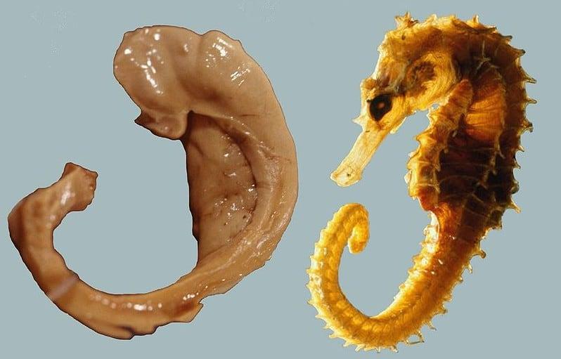 Beynimizdeki Deniz Atı: Hipokampus