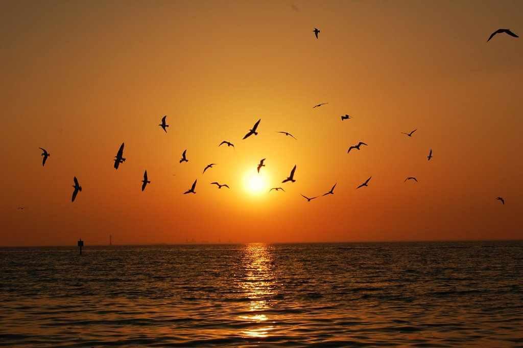 gün batımı ve kuşlar