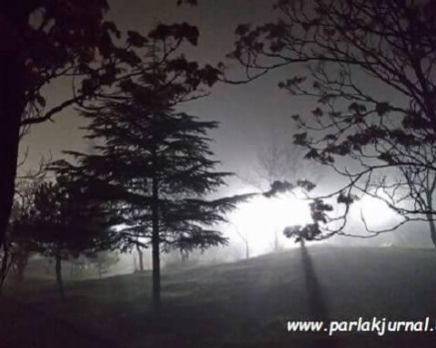 sis ve ağaçlar