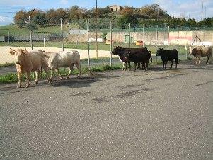 Animali vaganti: Alfano ritiri questa ordinanza-vergogna