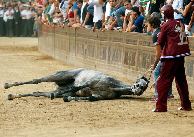 Palio di Siena: M5S, aprire indagine interna su condizioni cavalli. Morte Periclea scioccante