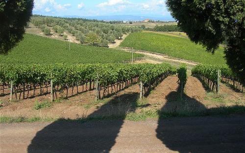 """Caporalato, M5S: """"Caso vigne Piemonte, sia apripista per controlli in tutta Italia"""""""