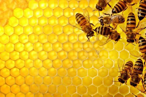"""Agricoltura, M5S: """"Governo ammette in ritardo rischio pesticidi per api"""""""