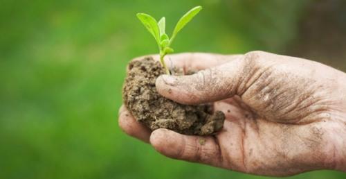 Dl Fisco, bocciata abolizione spesometro per agricoltori