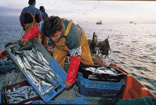 Pesca, Governo attui nostre misure anti-crisi