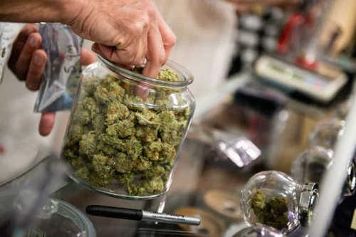 Cannabis legale: la legge è firmata da tutti, cosa stiamo aspettando?