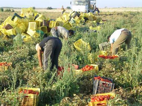 Agricoltura: Soddisfatti per nuova iniziativa Governo e Parlamento contro caporalato