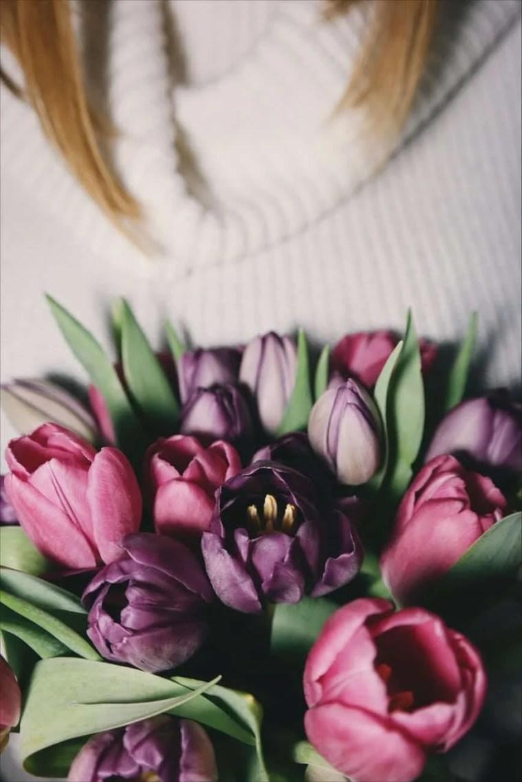 tulipes fleurs