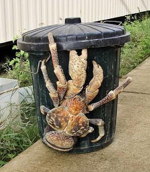 coconut_crab 2