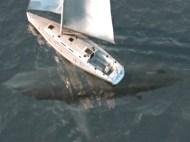 megalodon 2002