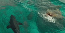 the shallows - pic 9