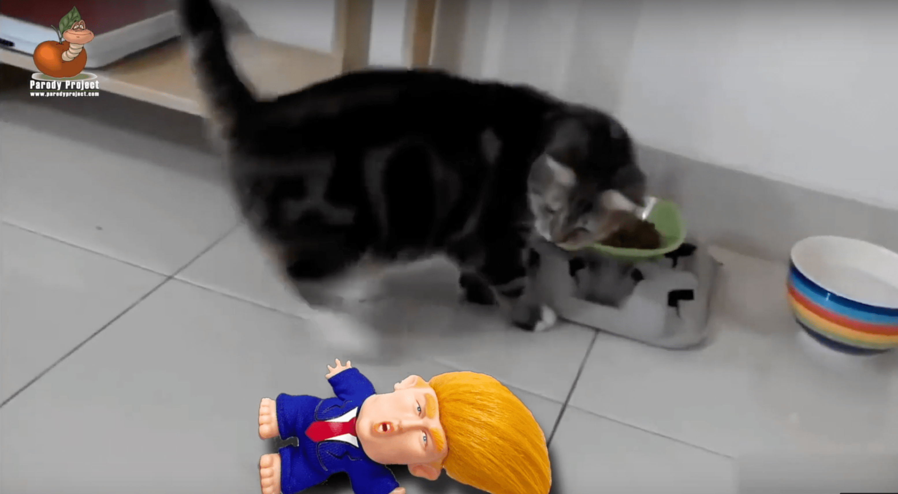 SOCIAL EXPERIMENT WITH CATS AND A TRUMP DOLL