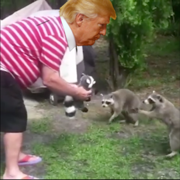 TRUMP DECEIVING HIS BASE – No offense to raccoons intended