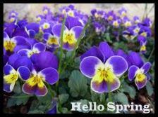 hello spring 5