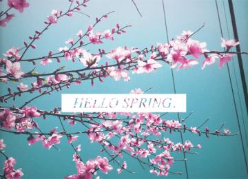 hello spring 7