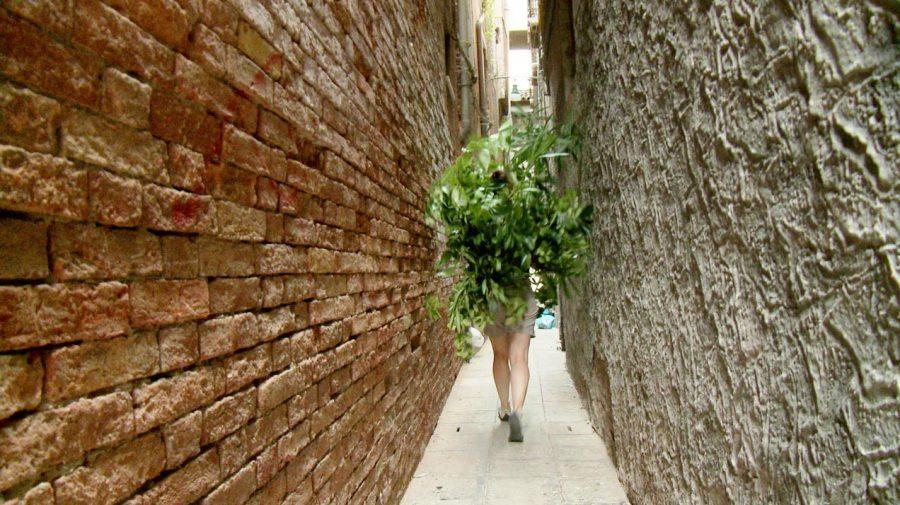Stella Geppert: «Arbusti - Moving Studies & Homeopathic Interventions», Full HD, Loop 10 min, Venedig, 2014 / 2015
