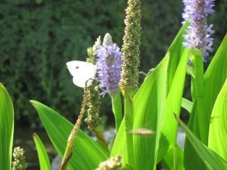 Orto botanico Giardino giapponese