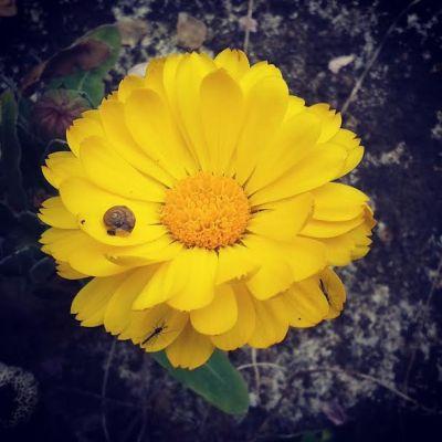 Cosa fare da grande: scrivere o coltivare fiori?