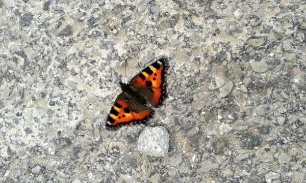 Un racconto al mese_Riflessioni di una farfalla