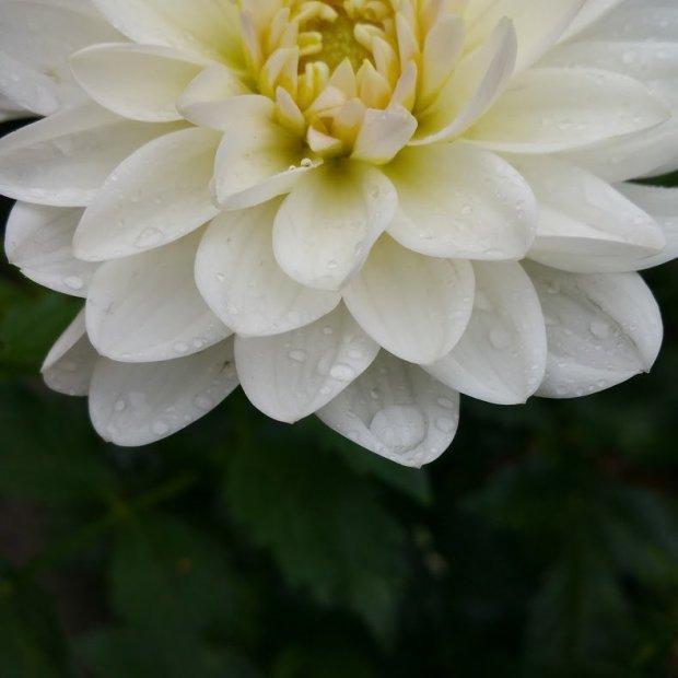 Poesia numero tre: pioggia (immagine di paroleombra.com)
