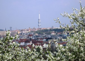 TV tower with Petrin blossoms