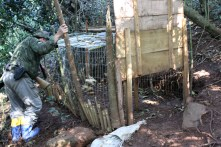 Apreensão de gaiola de caça dentro do parque.