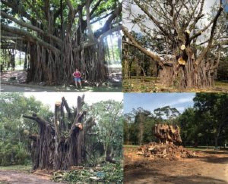 Fotos de (do alto à esquerda, em sentido horário): Andréa Guimarães; Parque Ibirapuera Conservação; Lucas Batistella; Lucas Batistella.