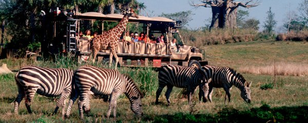 Disney's Animal Kingdom Safari