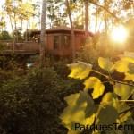 Duerme en los cobertizos de bosque en una Treehouse Villa de 3 dormitorios a una altura de 10 pies del suelo sobre vigas y pedestales, a orillas del pintoresco río Sassagoula River. Una Treehouse Villa en Disney's Saratoga Springs Resort & Spa bajo el sol de la mañana