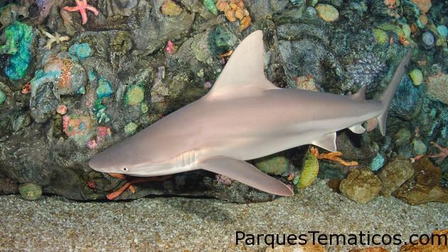 Tiburones y Rayas