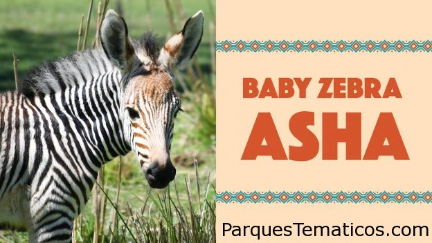 Disney Magic Moments presenta Asha en el parque temático Disney's Animal Kingdom