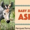 Disney Magic Moments presenta Asha en el parque temático Disney's Animal Kingdom