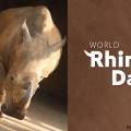 El Día Mundial del Rinoceronte en Disney's Animal Kingdom