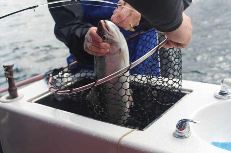 Trout on the Boat
