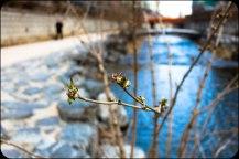 Cheonggyecheon spring