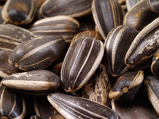 sunflower-seeds-in-shell