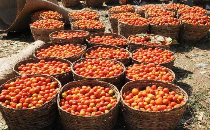 Dangote demands total ban on tomato importation